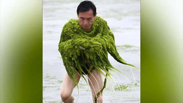 Could algae be a usable energy?