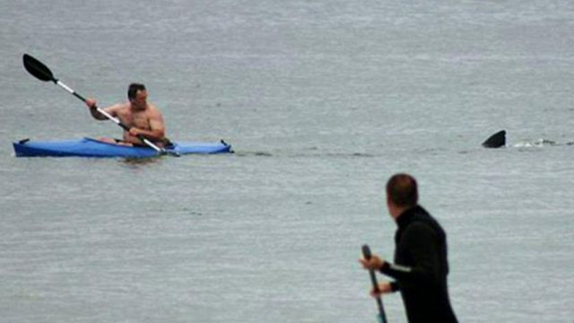 Great white shark trails kayaker in Cape Cod