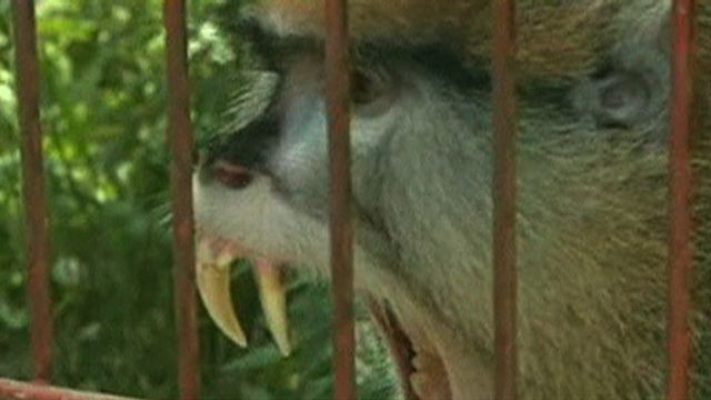 Pet Monkey Injures Family