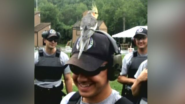 Plucky bird lands on cadet's head during firearm training