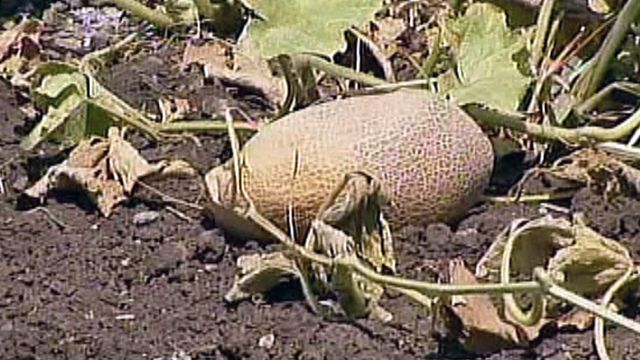 Drought Means Record Losses for Farmers
