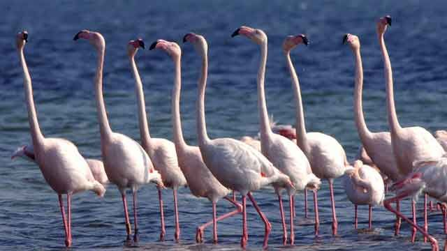 People stand like flamingos in Florida