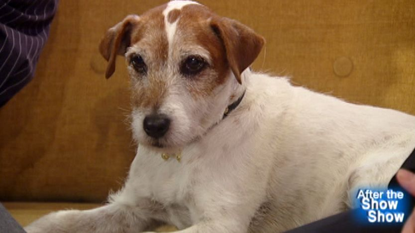 After the Show Show: Uggie