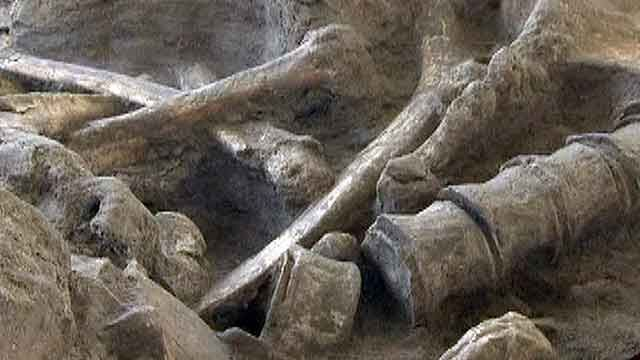 Around the World: Wooly mammoth skeleton found in France